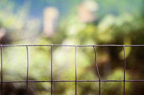 Pletivo jako ochrana stromků i celé zahrady