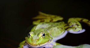 Frog 3445450 640