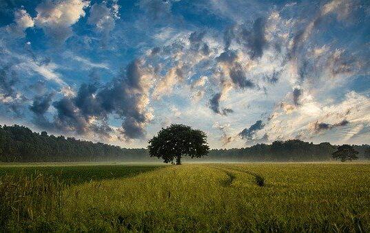 Tree 247122 640